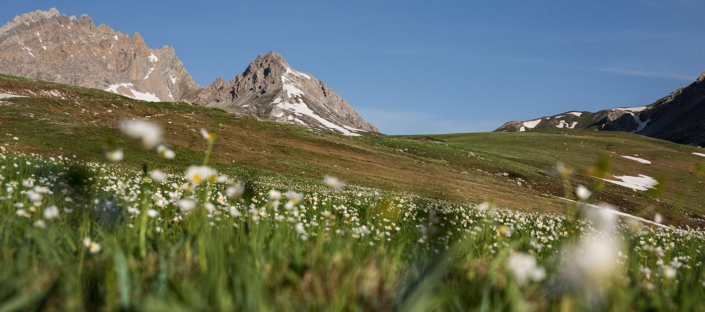 La Val Maira in fiore